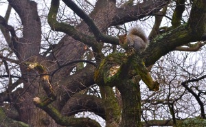 Squirrel picture for Yoga Blog